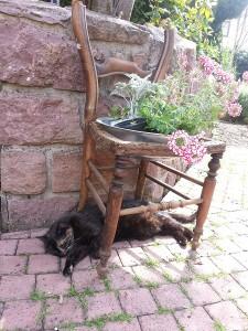 une chatte sous une chaise en plein été